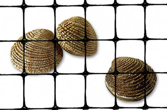 A piece of black clam netting and three clams in the netting.