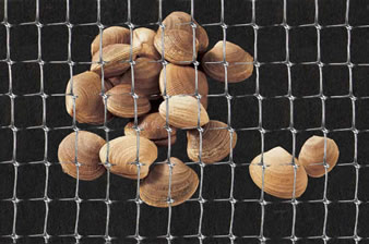 A piece of natural clam netting on the black background.