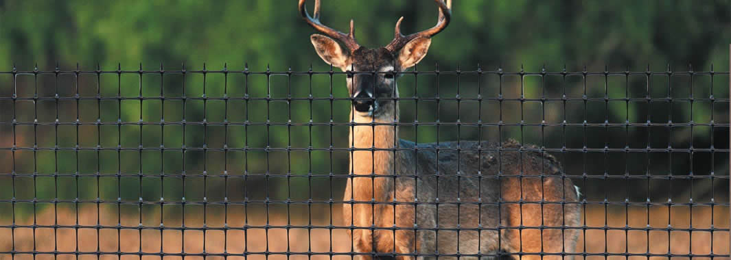 A piece of deer fence is installed on the field and a deer is standing outside of the fence.