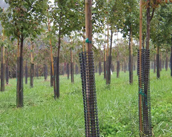 Several trees on the grassland and the black tree guard netting is installed on the tree.