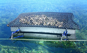 An oyster mesh netting in the seabed and fixed by the cable.