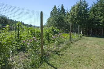 Rounded Strand Deer Fence Is Installed On The Wooden Post Surrounding The  Garden.