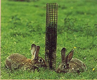 A black tree guards is installed around a young tree and two rabbits are lying beside of it.